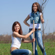 Stock Photo: Female gardeners planting tree