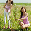 Mother and teen girl planting tree — Stock Photo