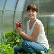 Smiling woman picking radish - Stock Photo