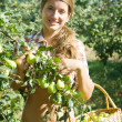 Girl picking apples — Stock Photo #6039570