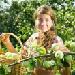 Girl picking apples — Stockfoto #6039580