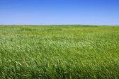 Simplemente paisaje de verano — Foto de Stock