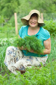 Mature woman with harvested dill — Stock Photo