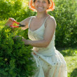 Stock Photo: Female gardener cutting thuja