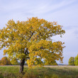 Autumn landscape with  oak — Stock Photo