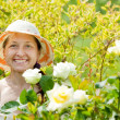 Mature woman in rose plant — Stock Photo