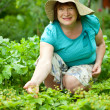 Mature woman in strawberry plant — Stock Photo #6044551