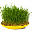 Grass of wheat grown — Stock Photo #6044778