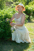 Female gardener cutting shrubbery — Stock Photo