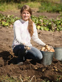 Girl is picking potato — Stock Photo