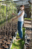 Woman with trees seedlings — Stock Photo