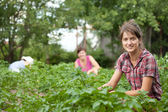 Women working in field of potato — Stock Photo