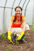 Woman planting tomato — Stock Photo