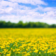 Summer dandelions meadow — Stock Photo