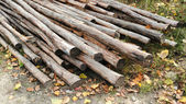 Bunches of felled trees at a logging site — Stockfoto
