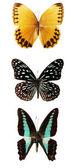 Vlinder aan de witte achtergrond — Stockfoto