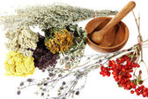 Medicinal herbs on the white background — Stock Photo