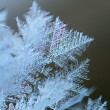 Stock Photo: Rime macro