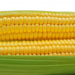 Isolated corn — Stock Photo #6480908