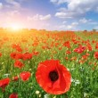 Big meadow of poppies — Stock Photo #6480959