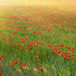Stock Photo: Poppy meadow