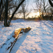 Winter in forest — Stockfoto #6481392