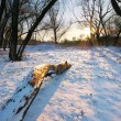 winter im wald — Stockfoto #6481392