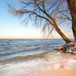 Sea and winter — Foto Stock