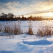 Winter landscape — Stock Photo #6481402