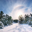 Winter landscape — Stock Photo #6481408