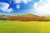 Wiosna łąka — Zdjęcie stockowe