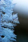 Macro of rime — Stock Photo