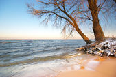 Sea and winter — Stock Photo
