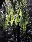 Sunshine and rain — Stock Photo