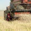 Cleaning grain harvesters — Stock Photo #6108729