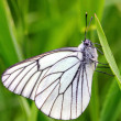 White butterfly on green grass — Stock Photo