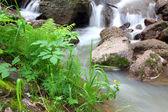 Waterfall stream in summer woods — Stock Photo