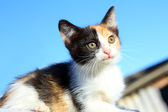 Kitten portrait under blue sky — Stock Photo