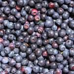 Fresh blueberry — Stock Photo #5536713