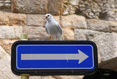 Seagull seats on a road sign — Stock Photo