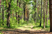 Summer mixed forest — Stock Photo