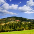 Mountains landscape with pine forest — Stock Photo