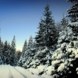 Winter fir-tree forest — Stock Photo #5579945