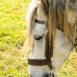 Horse graze macro - Stock Photo