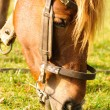 Stock Photo: Horse graze macro