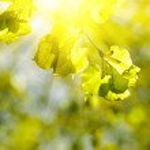 Bokeh background in spring — Stock Photo