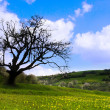 One old tree - Stockfoto