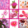 Pink flowers collage — Stock Photo