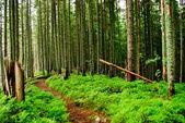 倒下的树与森林 — 图库照片