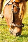 Horse graze macro — Stock Photo